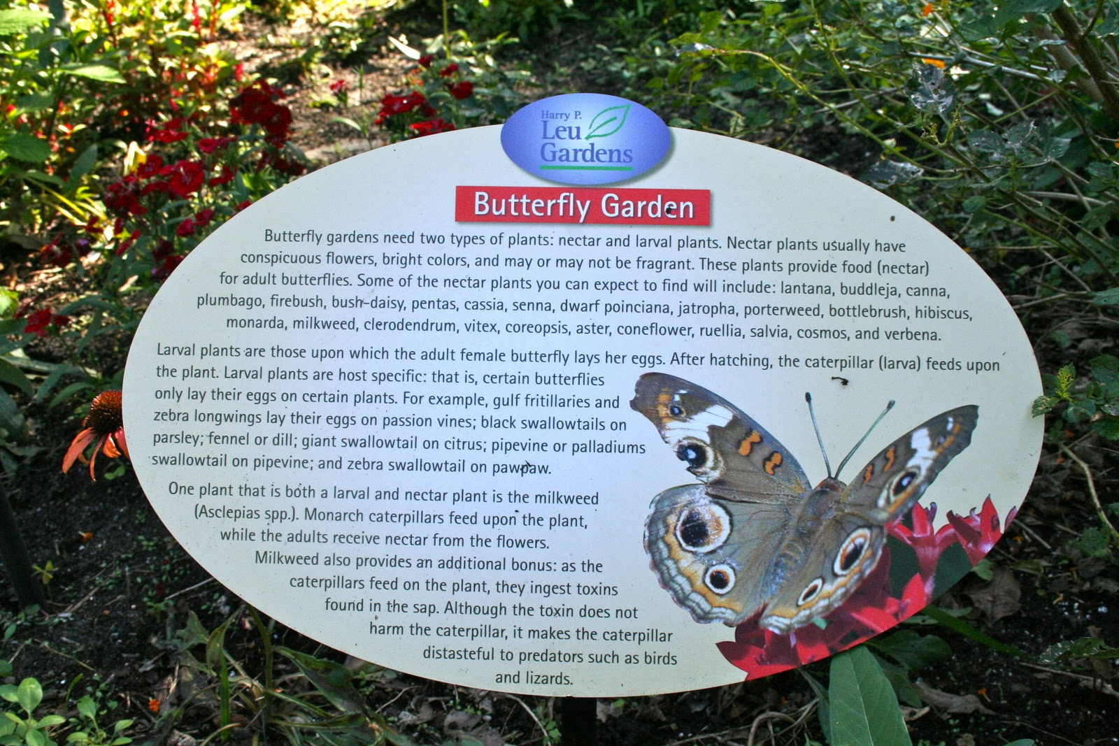 Entrance To The Butterfly Garden