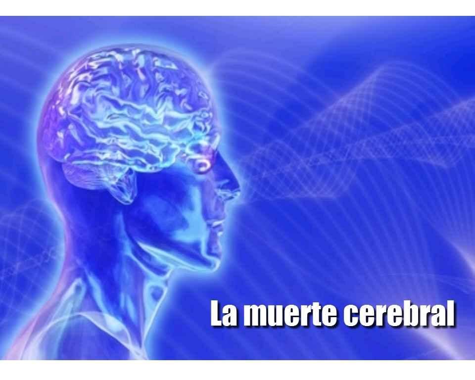 muerte cerebral bioetica: