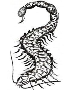 Scorpipede