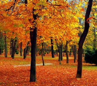 Cambrenda colores calidos colores frios colores - Colores frios y colores calidos ...