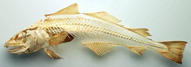 El asombroso esqueleto y la anatomía de los peces | Naturaleza ...