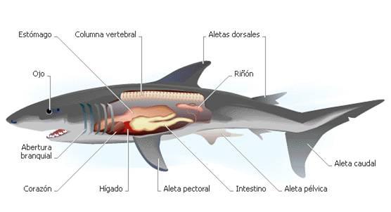 Los asombrosos y maravillosos tiburones | Naturaleza asombrosa ...