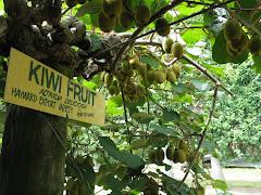 kiwi360