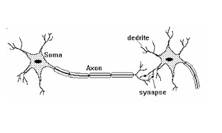 Neurofuzzy biological neuron model and artificial neuron model fig 1 typical neuron an axon figure 2 having a length varying from a fraction of a millimeter ccuart Gallery