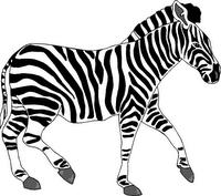 http://3.bp.blogspot.com/_mvraTDMhy3M/TI1kSD0ruKI/AAAAAAAAElQ/ZAsO55IgnQI/s1600/zebra_02.png
