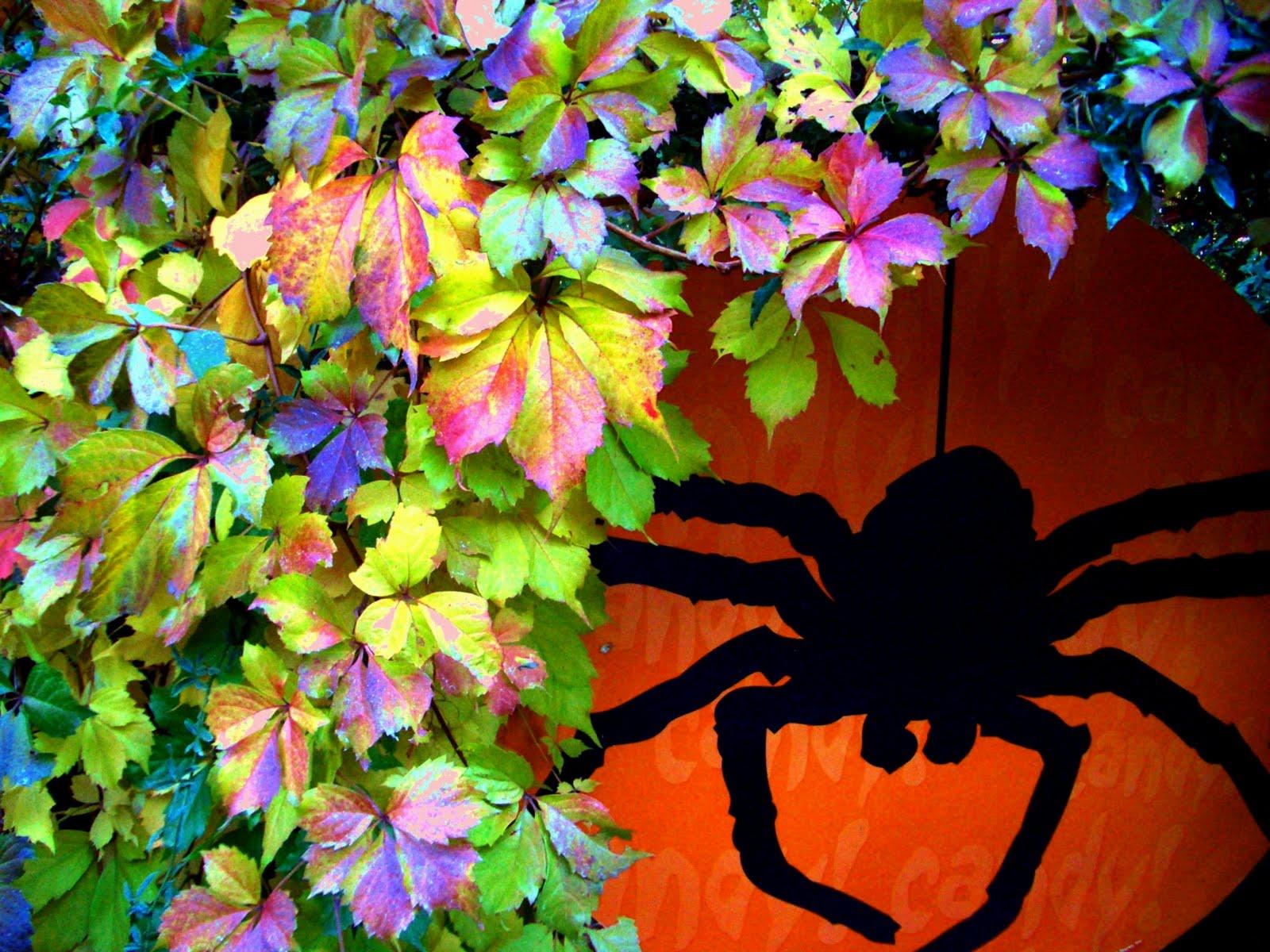 My Garden Spider