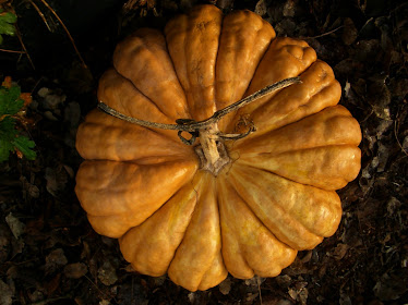 Beautiful Pumpkins are a sight to behold...