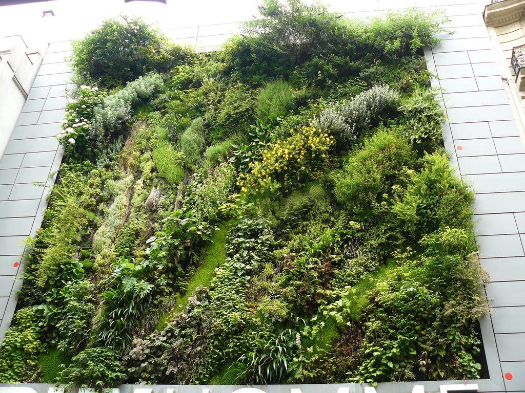 Matin lumineux jardin vertical - Jardin verticale ...