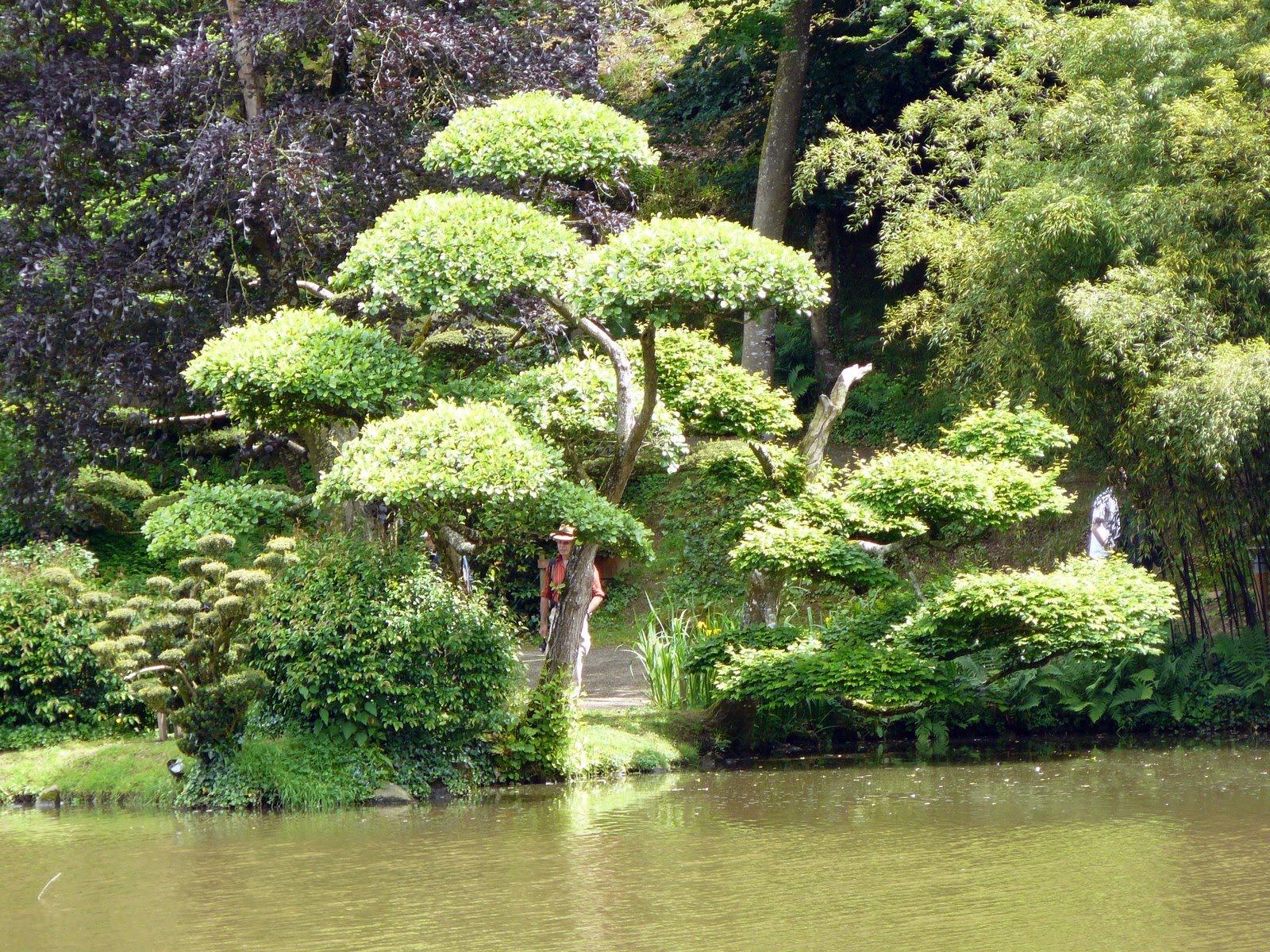 Matin lumineux jardins orientaux for Plan jardin japonais