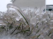 Ice Storm-2011