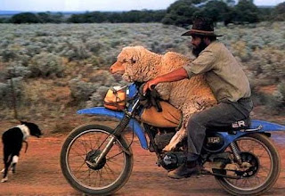 Funny animal with motorcycle Rider