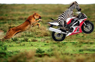 Funny animal with motorcycle