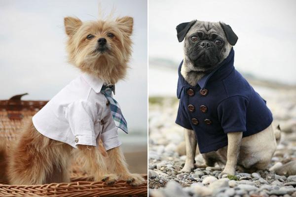 Стильная Одежда Для Собак
