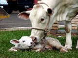 Mãe - Por Amor ou por Instinto, todos tem sentimentos.