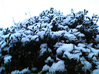 雪降ってきた