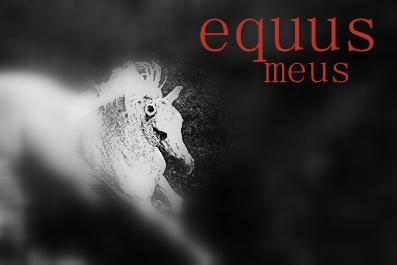 equus meus
