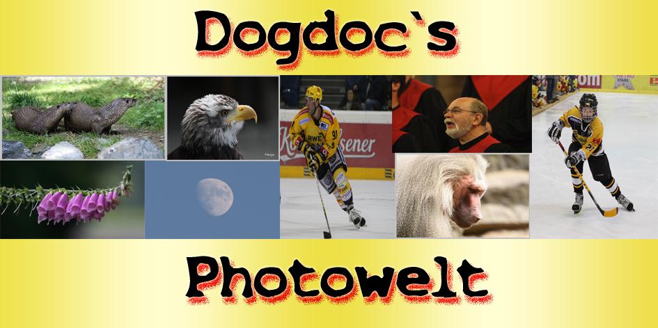 DOGDOC`s Photowelt