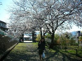 Everyone love Sakura