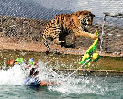 http://3.bp.blogspot.com/_n26hr1BVNx0/S6_PojjneQI/AAAAAAAAKC0/zLBKl_5gHcw/s400/Tigers+3.jpg