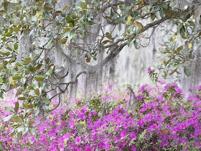 Flowers Walpaper