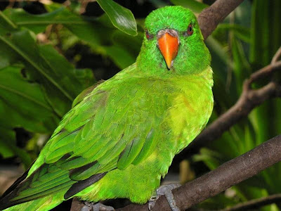 Cute Colorful Green Parrots Around the World