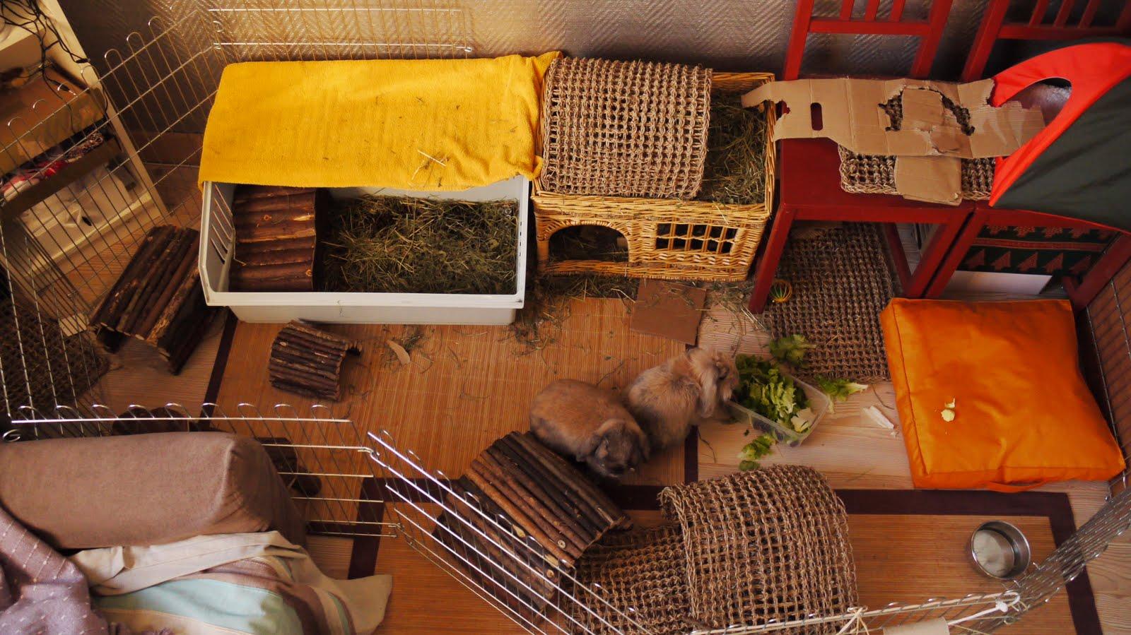 Enclos lapin - Jeux pour lapin a fabriquer ...