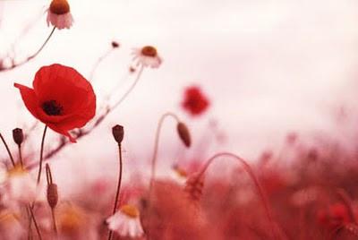 http://3.bp.blogspot.com/_n34jHsvJD_A/TOWUpTnOaEI/AAAAAAAAJRs/bQZJpexdVlU/s400/remembrance-day.jpg