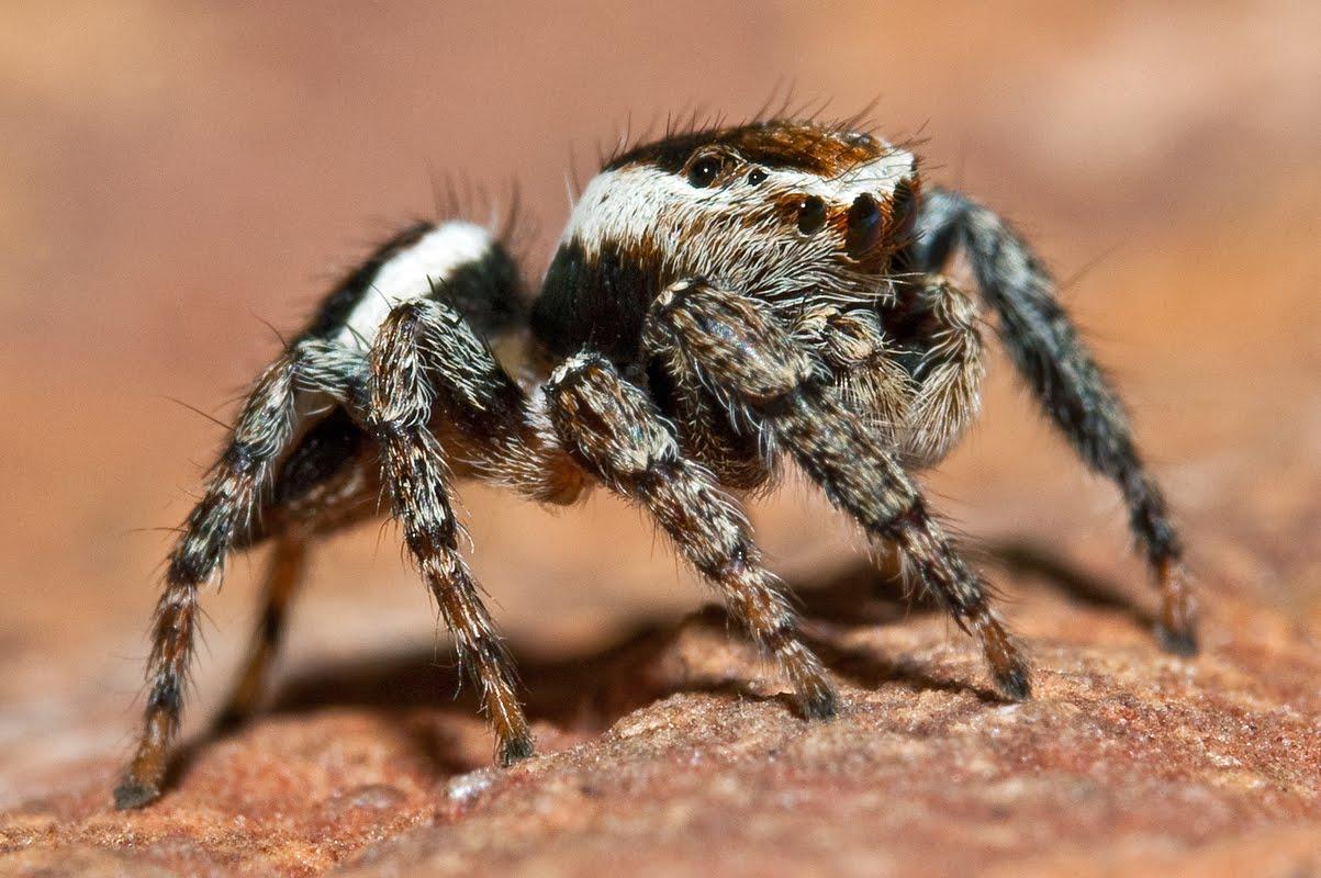 N Spiders Harvey's Sp...