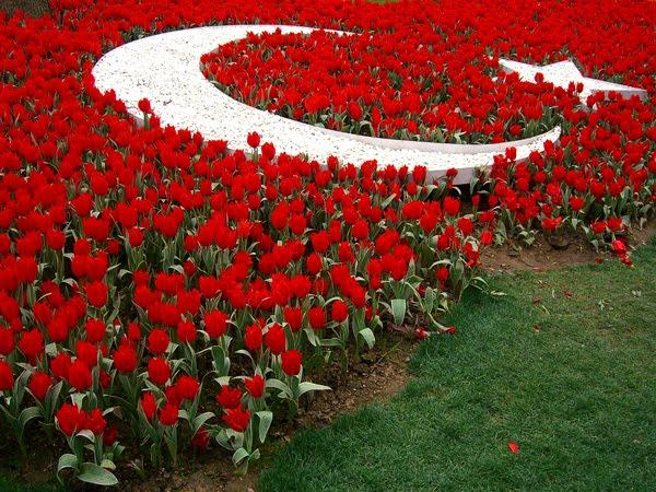 Galerías de Fotos - Ver Fotos De Flores Tulipanes