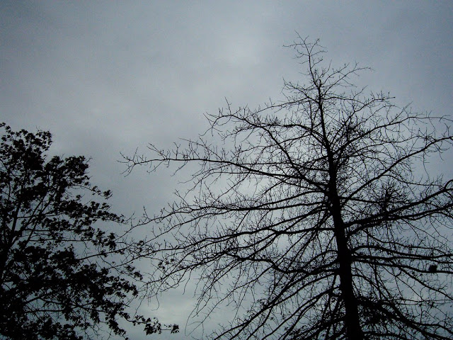 Leafless trees in winter.