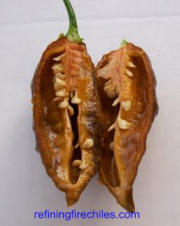 ghost chile-chocolate bhut jolokia