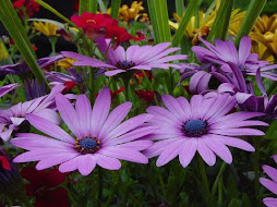 More Pretty Daisies...