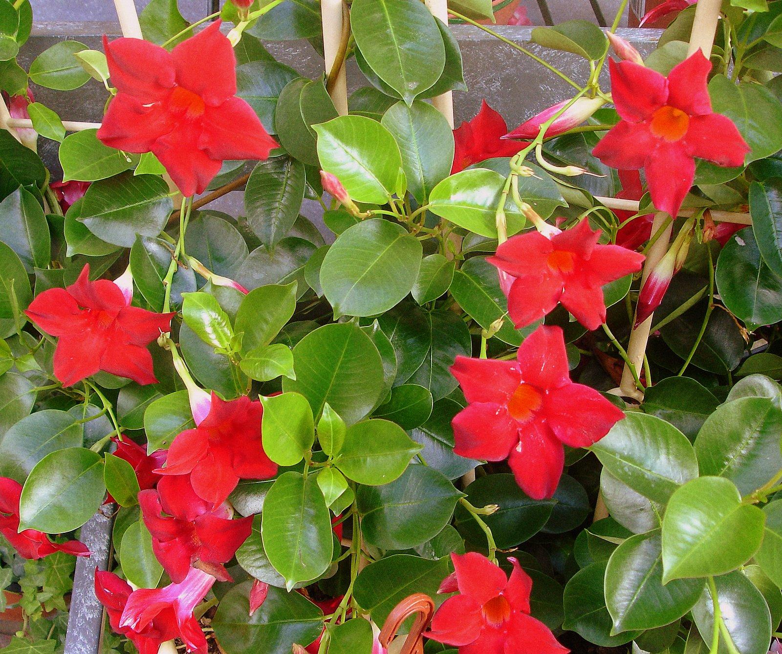 Plantas de floristeria la plaza plantas de exterior for Plantas decorativas de exterior