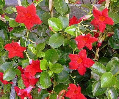 Plantas de floristeria la plaza plantas de exterior - Cuidar hortensias exterior ...