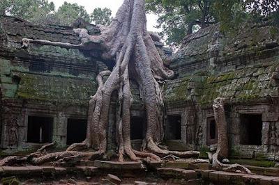 strange and funny trees 15 Pohon Aneh Yang Tumbuh Di Tempat Aneh