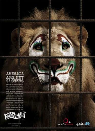 Animal — not clowns!