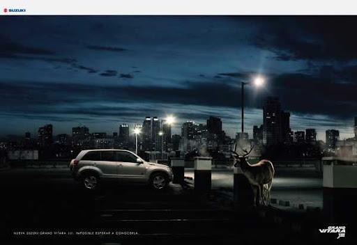Animals cannot wait the moment to look on new Suzuki Grand Vitara