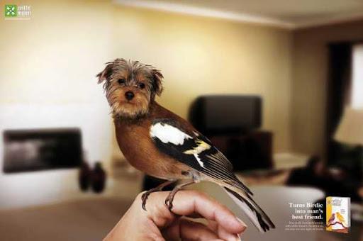 Forage WITTE MOLEN transforms birdies into dogs