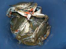 Callinectes Sapidus