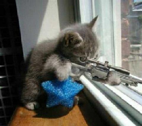 """el boton de """"gracias"""" Gato_pistola"""