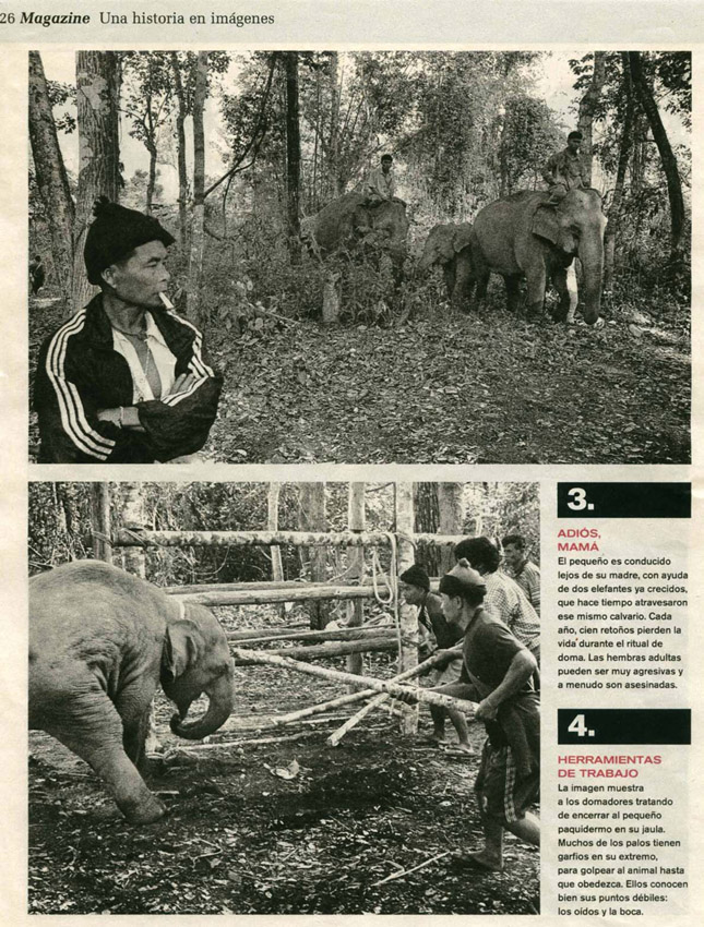 Animales + Prótesis Biónicas = Animales Biónicos