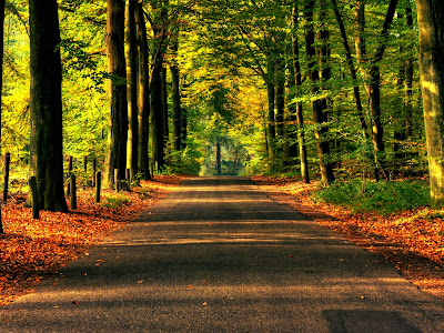 Road Between Trees Brown Yellow Leaves HD Wallpaper