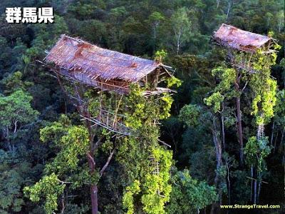 Casas en las copas de los árboles