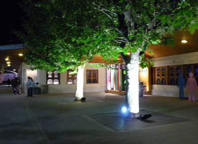 Árboles con luz
