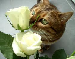 http://3.bp.blogspot.com/_nFSvNRhOUM4/THxV2fUj-kI/AAAAAAAAASk/q6Y6KwzPjc0/s1600/smell12.jpg