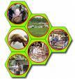 Lowongan Kerja Bidang Pertanian dan Kehutanan di Kalimantan Tengah