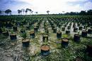 Lowongan Kerja Perkebunan Kelapa Sawit Kalimantan Tengah