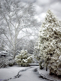 First Snow by Cocoabiscuit on Flickr
