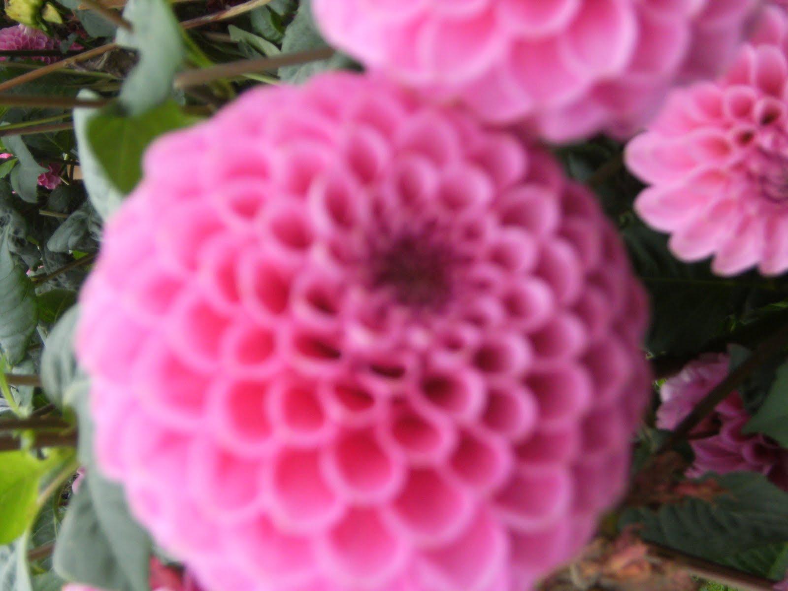 http://3.bp.blogspot.com/_nHblqOZoJ7I/S8Gy57-oOhI/AAAAAAAAAKI/GjR_jFJsGHQ/s1600/ireland+426.jpg