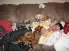 When I had All 7 Dog's